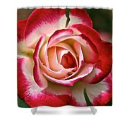 Cherry Vanilla Rose Shower Curtain