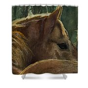 Chestnut Dreams Shower Curtain