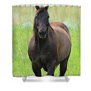 Chestnut Mare Shower Curtain