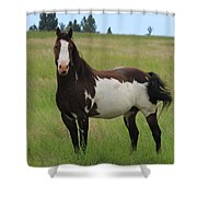 Chestnut Overo Paint Stallion Shower Curtain