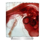 Chick Development 1112 Shower Curtain by Science Source
