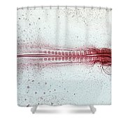 Chick Development 612 Shower Curtain by Science Source