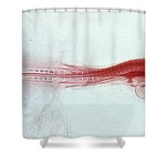 Chick Development 712 Shower Curtain by Science Source