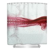 Chick Development 812 Shower Curtain by Science Source