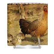 Chicken And Chicks Shower Curtain