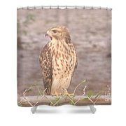 Chicken Hawk 2 Shower Curtain