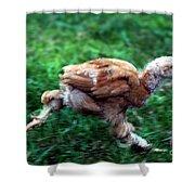 Chicken Little Shower Curtain