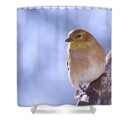 Chickie Chickie Shower Curtain