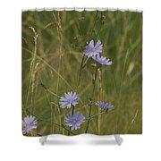 Chicory 2765 Shower Curtain