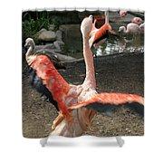 Chilean Flamingo Shower Curtain