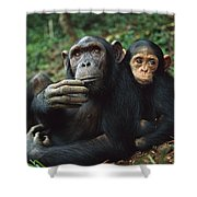 Chimpanzee Adult Female With Orphan Baby Shower Curtain
