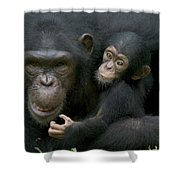 Chimpanzee Female Holding Infant Shower Curtain