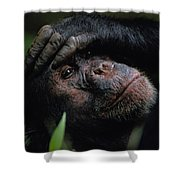 Chimpanzees, As Reported By Jane Shower Curtain