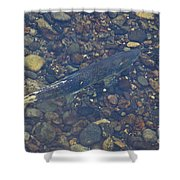 Chinook Salmon Shower Curtain