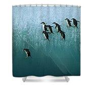 Chinstrap Penguin Pygoscelis Antarctica Shower Curtain