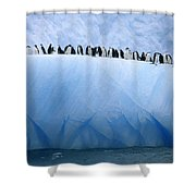 Chinstrap Penguins Lined Shower Curtain