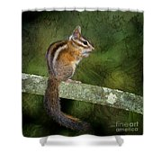 Chipmunk In The Forest Shower Curtain