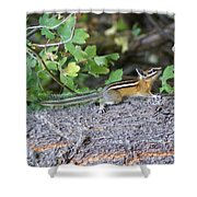 Chipmunk On A Log Shower Curtain
