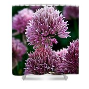 Chive Blossom Shower Curtain