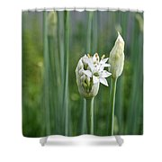 Chive Fields Shower Curtain
