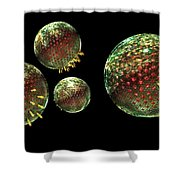 Chlamydia Group Shower Curtain