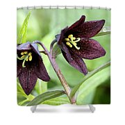 Chocolate Lilly Shower Curtain