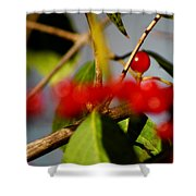 Choice Berry Shower Curtain by LeeAnn McLaneGoetz McLaneGoetzStudioLLCcom