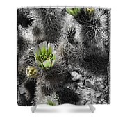 Cholla Blossoms Shower Curtain