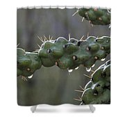 Cholla Cactus In The Rain Shower Curtain