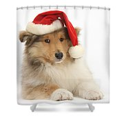 Christmas Collie Pup Shower Curtain