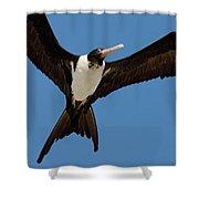 Christmas Island Frigatebird Fregata Shower Curtain
