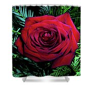 Christmas Rose Shower Curtain by Mariola Bitner