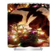 Christmas Spaniel Shower Curtain
