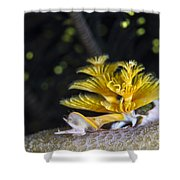 Christmas Tree Worm In Raja Ampat Shower Curtain