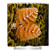 Christmas Tree Worm Spirobranchus Shower Curtain