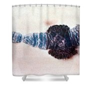 Chromosome Replication Shower Curtain by Science Source