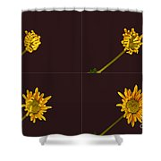 Chrysanthemum Blooming Sequence Shower Curtain