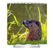 Chucky Woodchuck Shower Curtain
