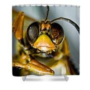 Cicada Killer Shower Curtain