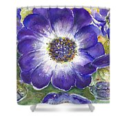 Cineraria Of South Africa  Shower Curtain