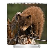 Cinnabun Shower Curtain