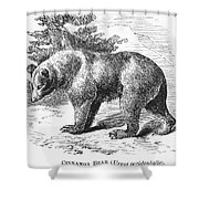 Cinnamon Bear Shower Curtain