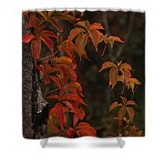 Circle Of Seasons Shower Curtain