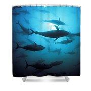 Circling Bluefin Tuna Shower Curtain