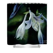 Cladis 02s Shower Curtain