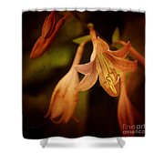Cladis 03s Shower Curtain