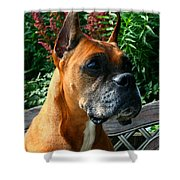 Classic Boxer Shower Curtain