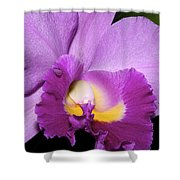 Classic Purple Orchid Shower Curtain