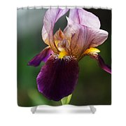 Classic Purple Two-tone Dutch Iris Shower Curtain