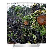 Clear Cut Red Mangrove Stand Shower Curtain